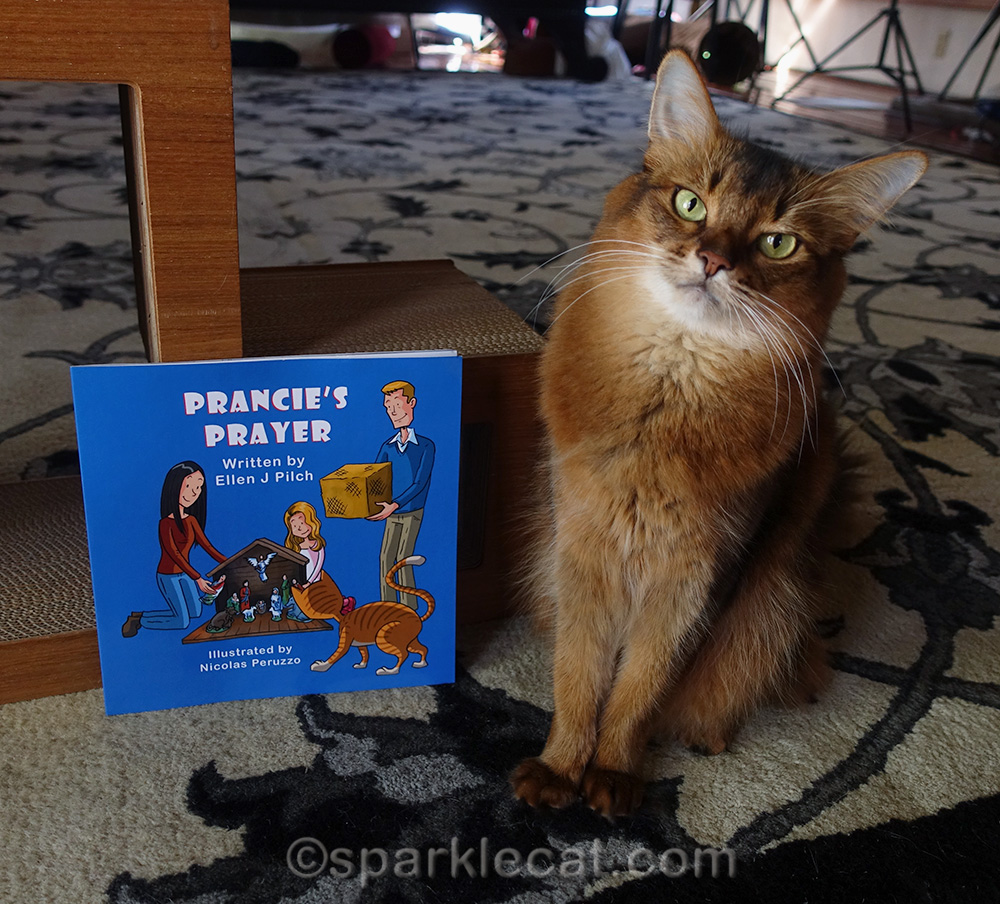somali cat posing with copy of Prancie's Prayer