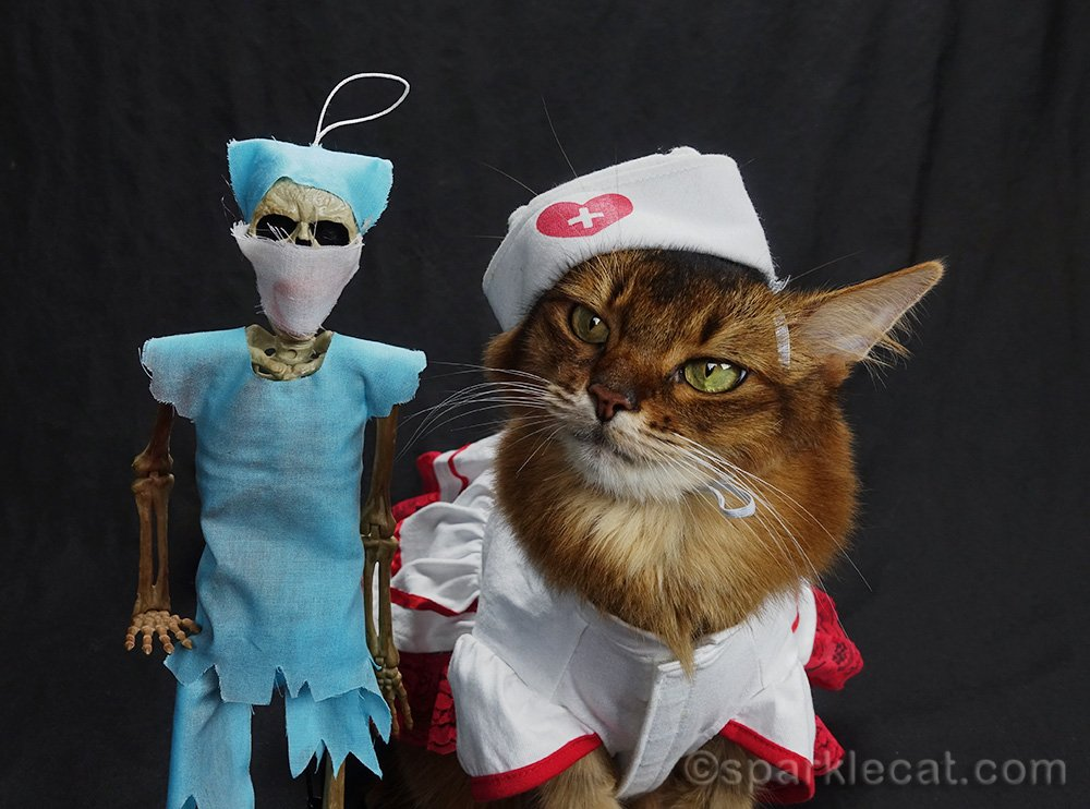 somali cat in nurse's outfit looking at skeleton doctor in scrubs