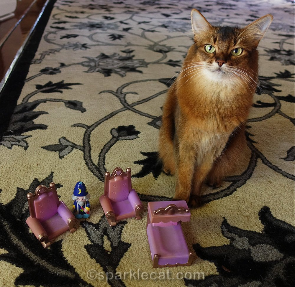 somali cat with plastic castle toy pieces