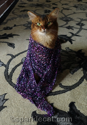 somali cat wrapped up in purple scarf