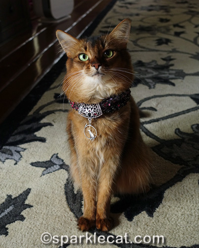 somali cat wearing pretty handmade necklace gift