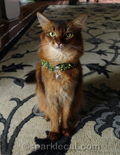 somali cat wearing green handmade necklace