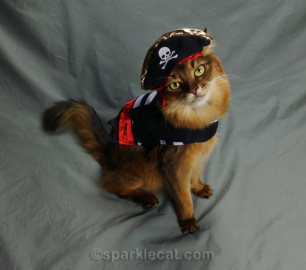 somali cat posing in pirate costume