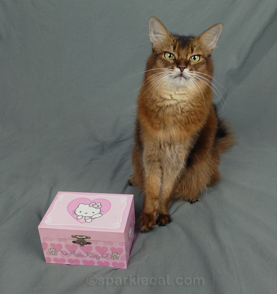 Summer digs into her human's Hello Kitty jewelry box and tries on her vintage necklaces.