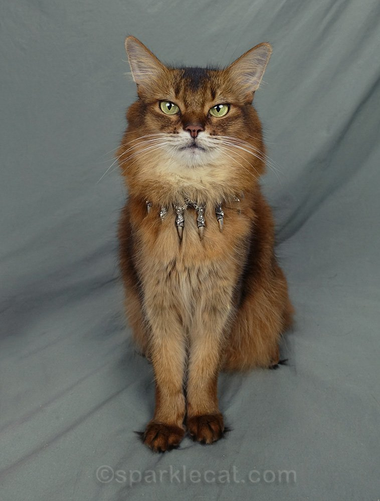 somali cat in metal claws necklace