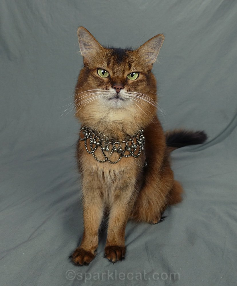 somali cat wearing 1980s necklace