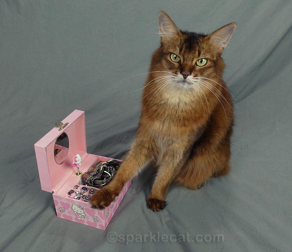 somali cat with paw on jewelry box