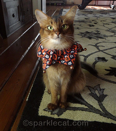 I would wear this all day, especially if I got treats for doing it