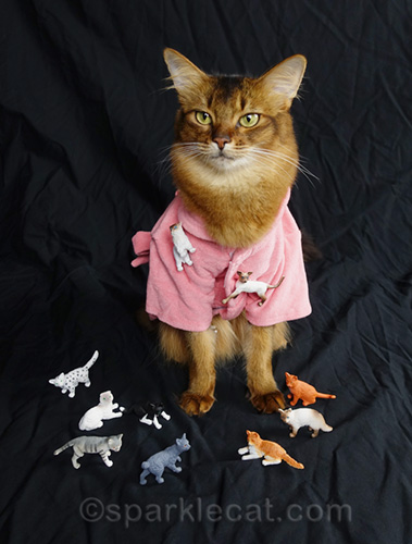 somali cat wearing a robe and surrounded by small plastic cats