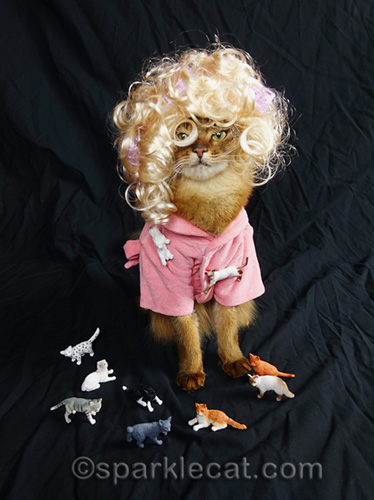 somali cat dressed as a crazy cat lady