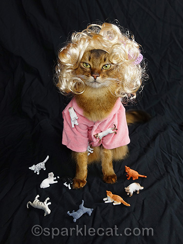 somali cat having problems with her wig