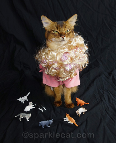 somali cat having wig problems