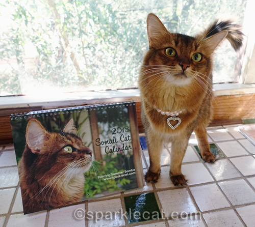 somali cat posing with her new 2018 calendar