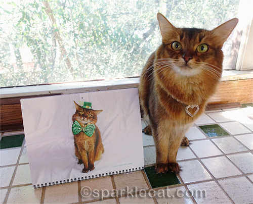 somali cat posing with March from her calendar