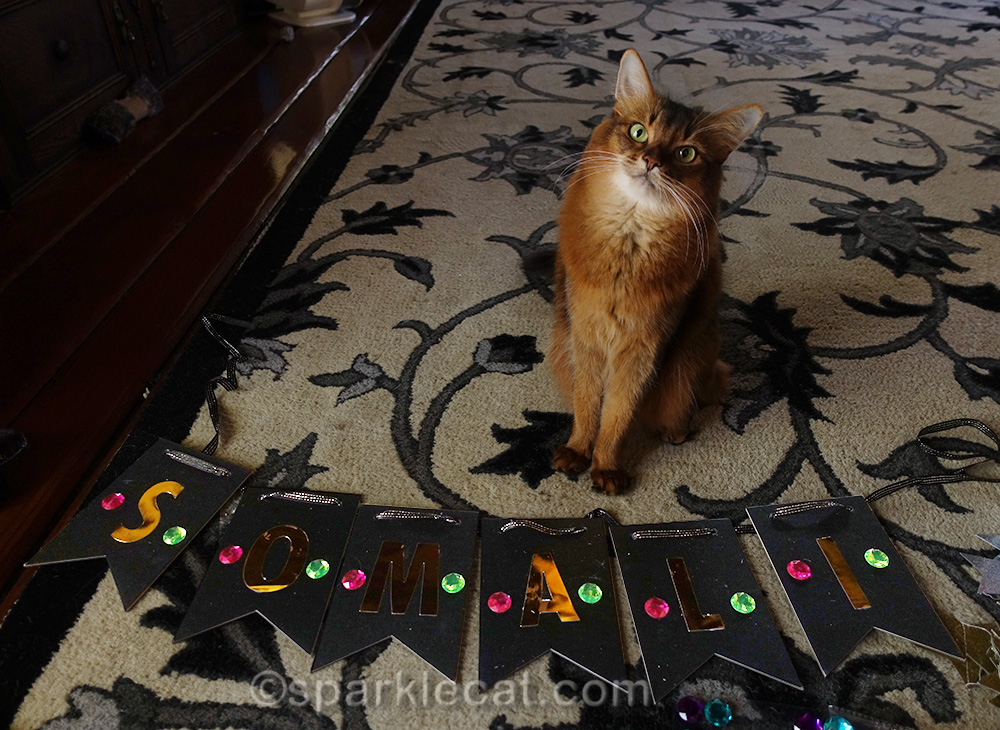 somali cat with finished Somali banner