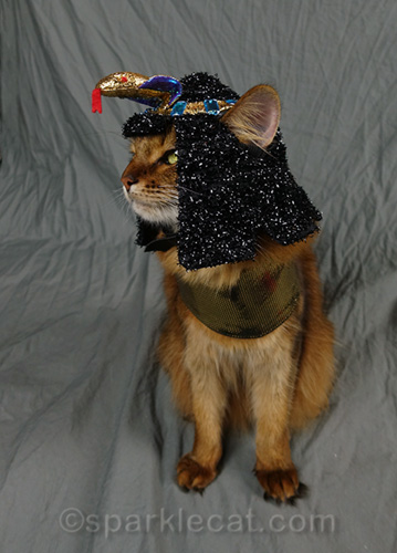 somali cat profile in Egyptian costume