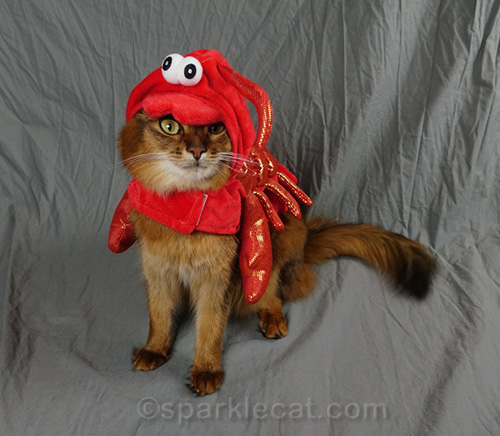 somali cat wearing lobster Halloween costume