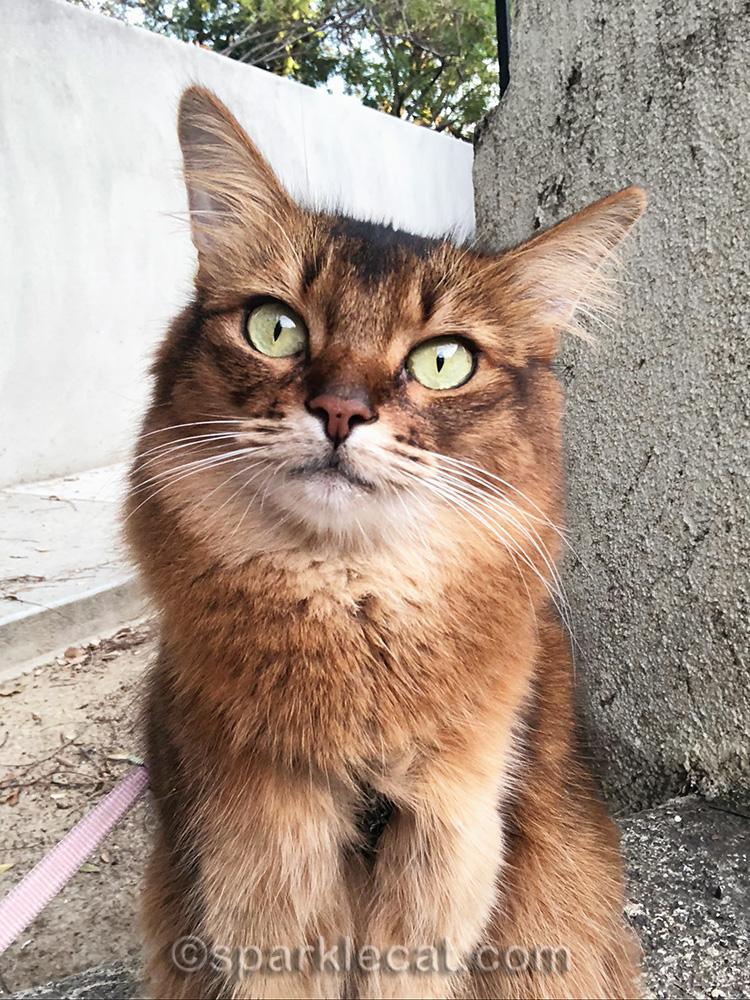 cat selfie al fresco