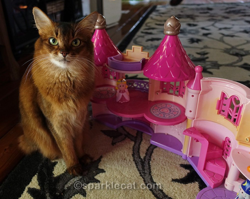 somali cat with open castle