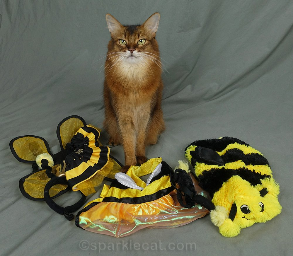 Summer has enough bee costumes for a whole hive! And she models them.