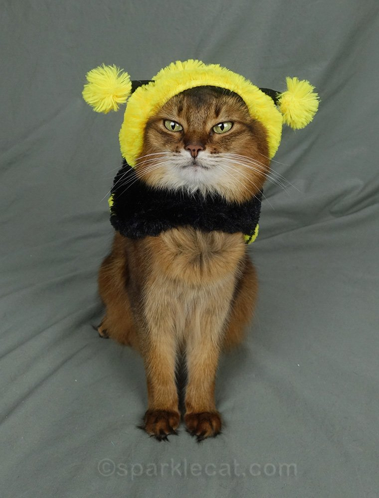somali cat in one-piece bee costume