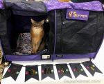Dress Up Cat Show