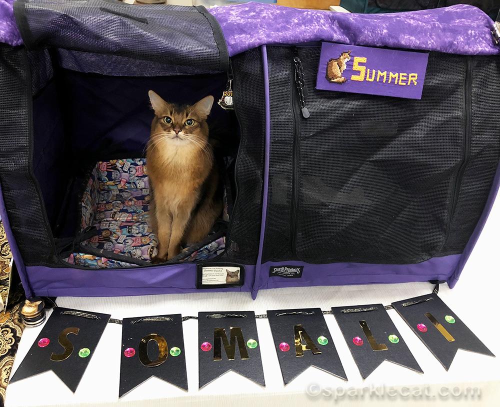 somali cat in enclosure at cat show