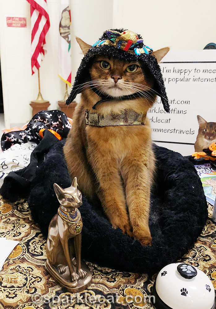 somali cat playing dress up in Cleopatra headdress