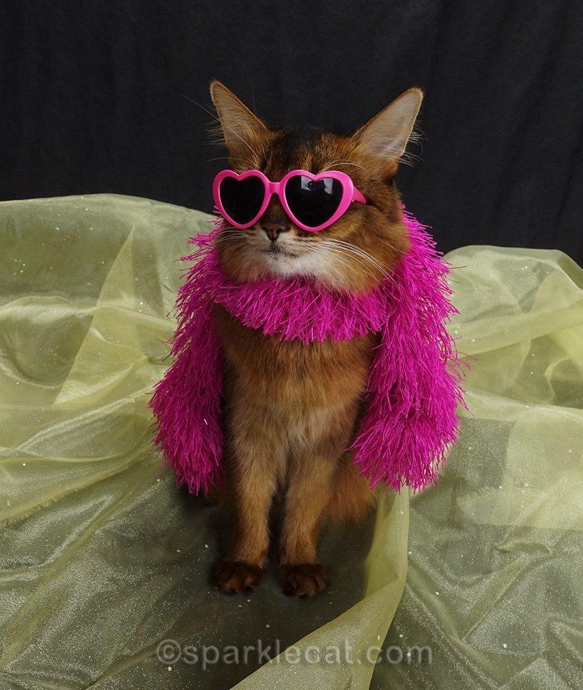 somali cat in pink fashion boa and heart-shaped sunglasses