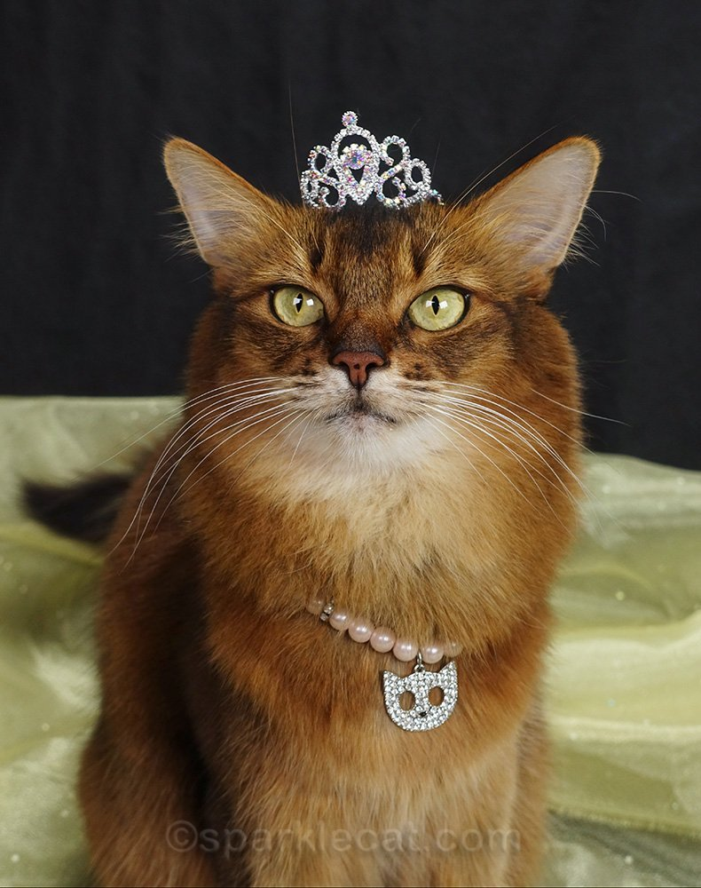 somali cat wearing pearl necklace and a tiara