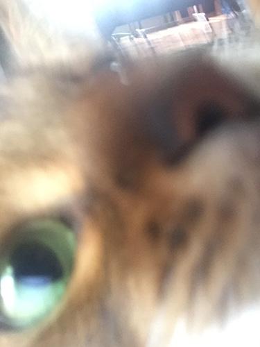 somali cat misfires while taking selfie