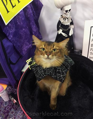 somali cat wearing spiderweb collar