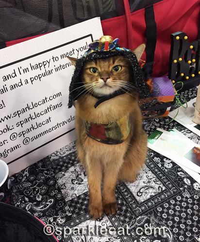 somali cat in Cleocatra costume