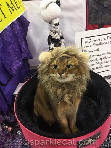 somali cat wearing lion headdress