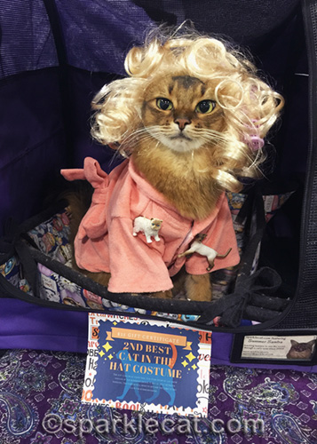 somali cat wins second place in costume contest as crazy cat lady