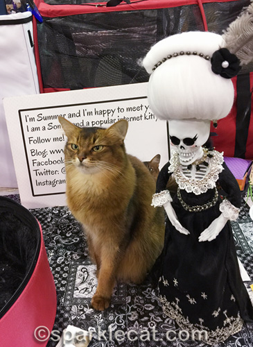 somali cat still haunted by la suegra