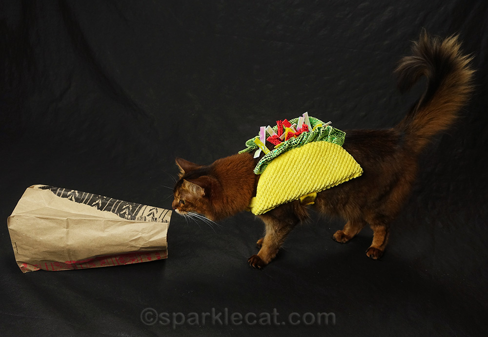 somali cat in taco costume sniffing fast food bag