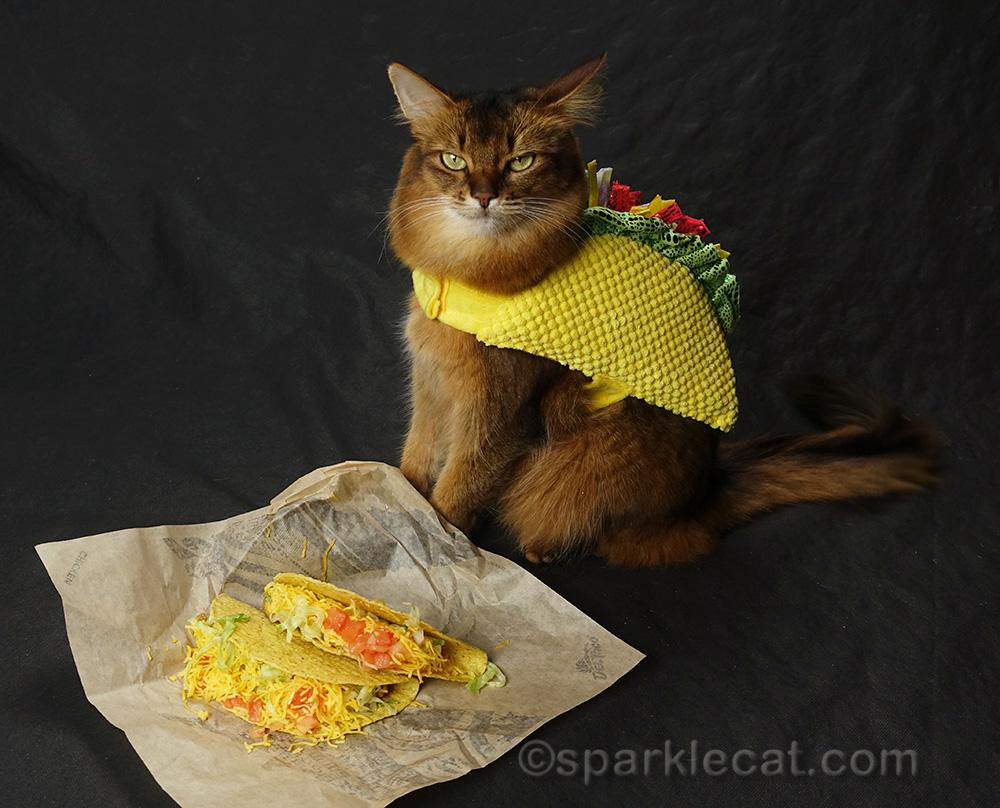 taco cat posing with actual tacos