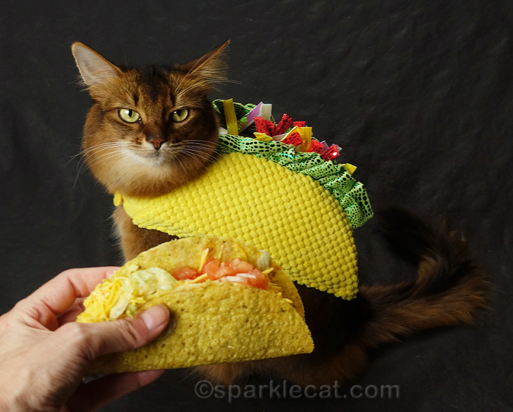 comparing an actual taco with a taco cat