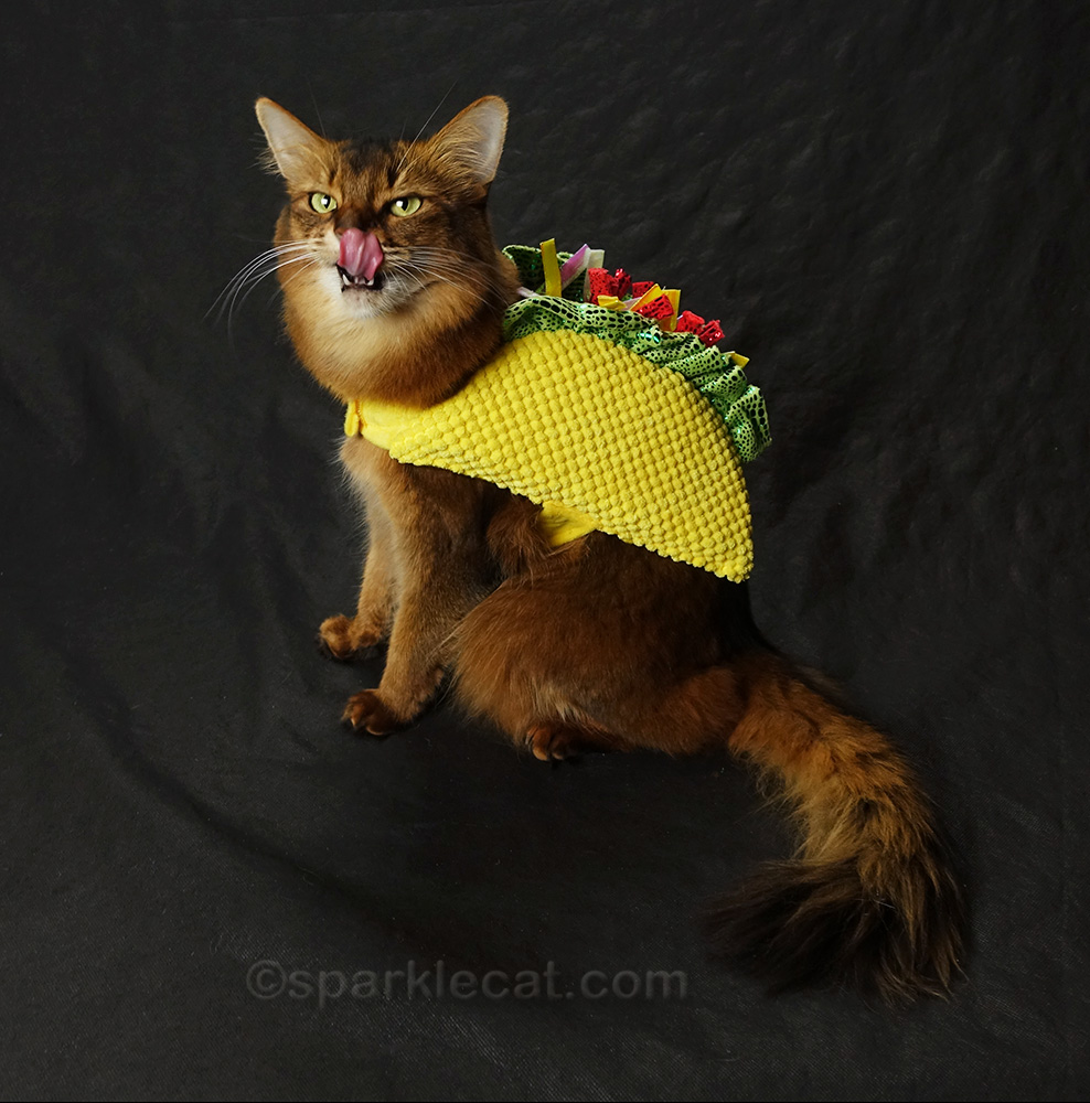 taco cat with tongue out