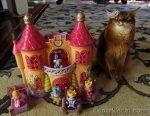 somali cat losing her tiara