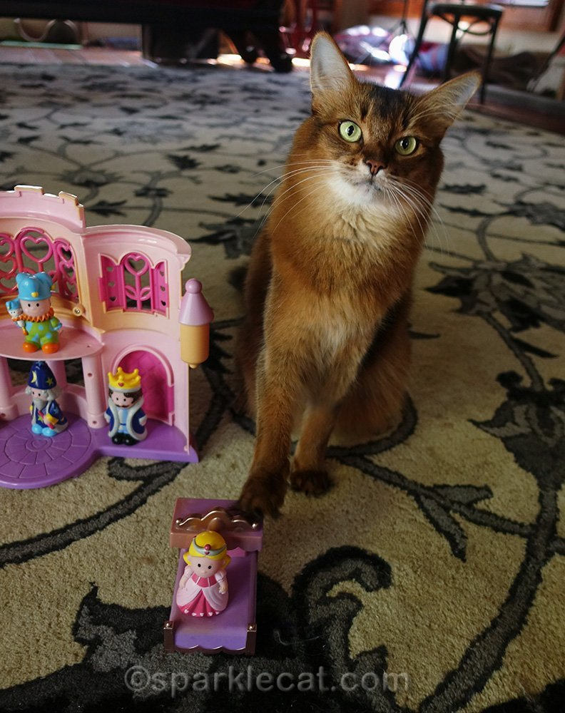 somali cat touching toy from hand-me-down castle