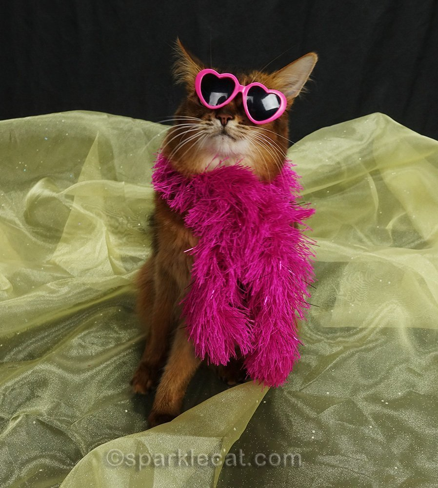 somali cat in pink boa with crooked sunglasses