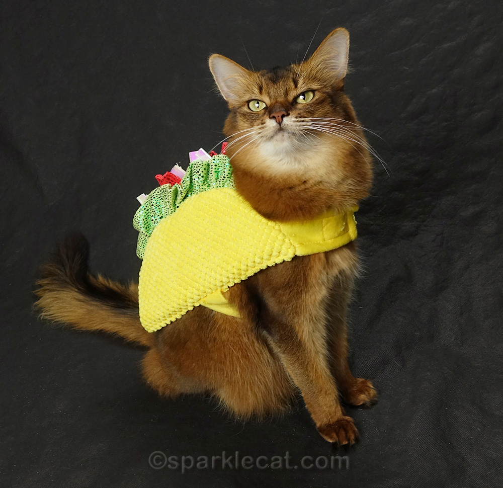 dress up your cat for halloween?