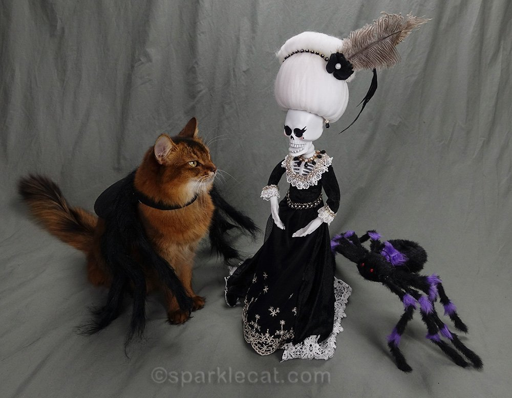 somali cat in spider costume saying boo to la suegra