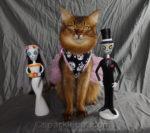 Dia de los Muertos y Gato