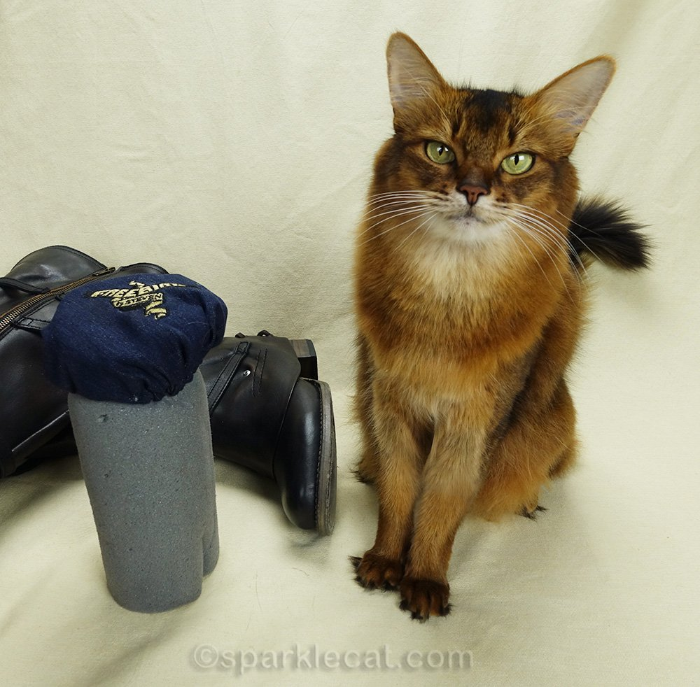 somali cat with boot shaper