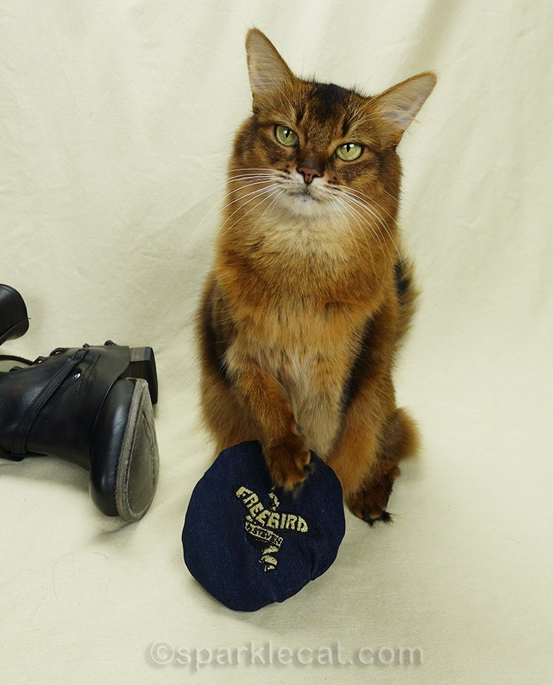 somali cat with boot cat hat