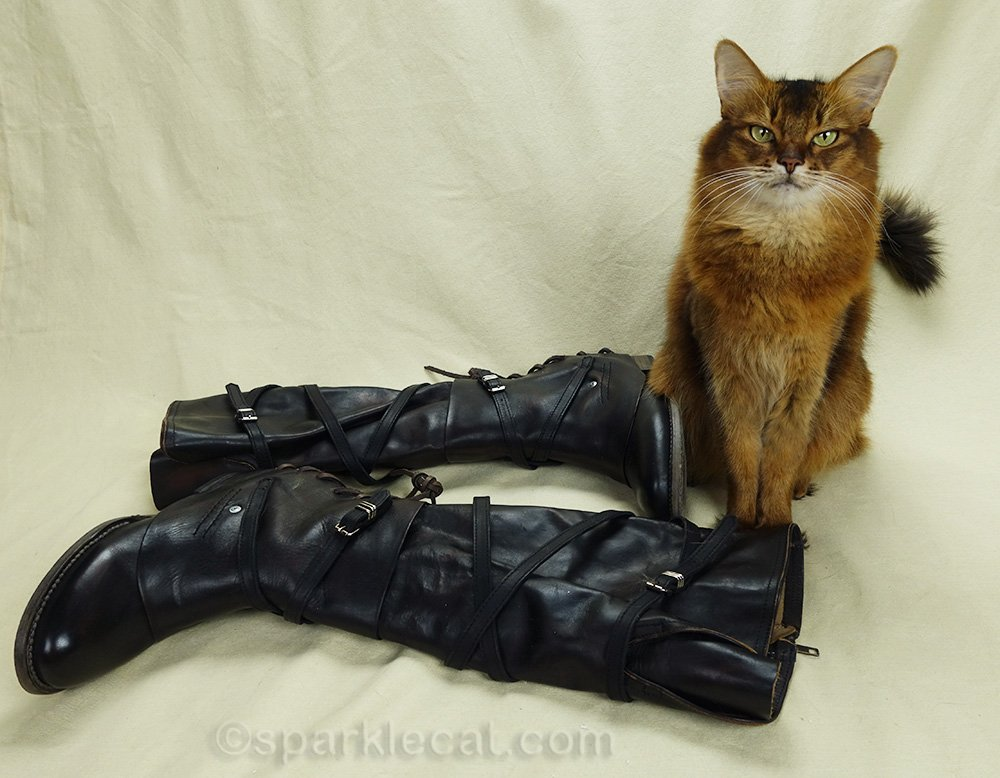 somali cat with new leather boots