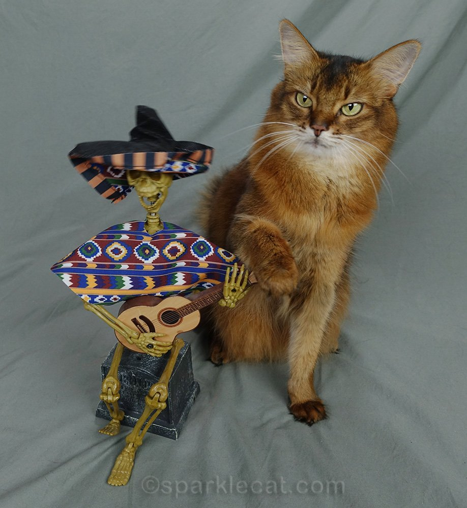 somali cat with dead musician friend, with paw on the guitar
